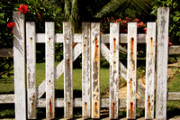 White picket fence_8298
