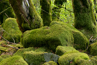 Mossy rocks and trees
