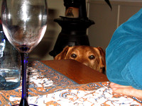 Troy_Peeking_over_the_Table_2