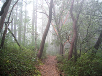 Trail_the_foggy_forest