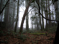 Aliens_landing_in_the_foggy_forest