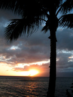 Palm_tree_and_sunset_2