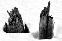 Stumps in snow_0068
