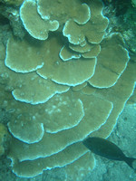 Interesting_coral_growth